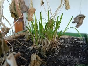 wann pflanzen zurückschneiden der ideale start ins gartenjahr oder wann fange ich an
