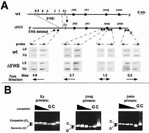 Initiation Of Dna Replication In The Absence Of The 5  U0408