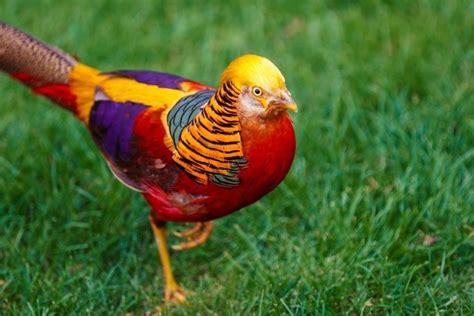 volatili da cortile essas ser 227 o as 15 mais belas e ex 243 ticas aves que voc 234 j 225