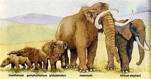 Animal evolution and evolution of all living things on ...