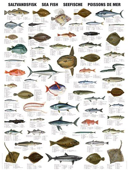 sea fish types productsindia sea fish types supplier