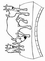 Goat Coloring Pages Animals Mycoloring Recommended sketch template