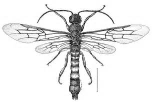 Insect Art Drawings