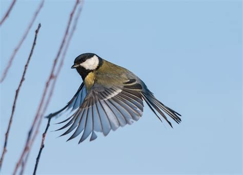 bacterial diseases in birds petmd