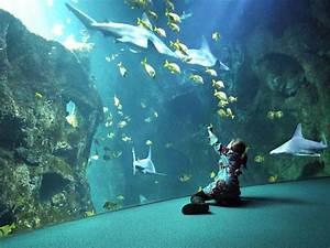 Aquarium Berechnen : camping les pins in der n he vom feriendorf ~ Themetempest.com Abrechnung