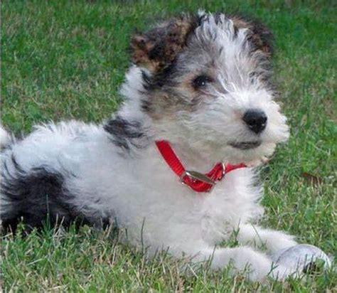 289 best puppys images on pinterest