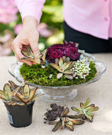how to make your own succulent display better homes