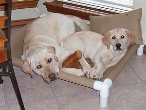 pvc cots for dogs the diy girl With best dog cot