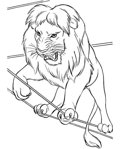 circus lion walking  rope coloring page color luna