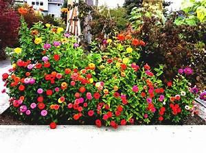 Diseño de jardines pequeños y modernos Plantas