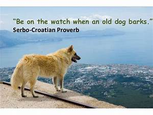 Dog proverbs Serbo Croatian Quotes