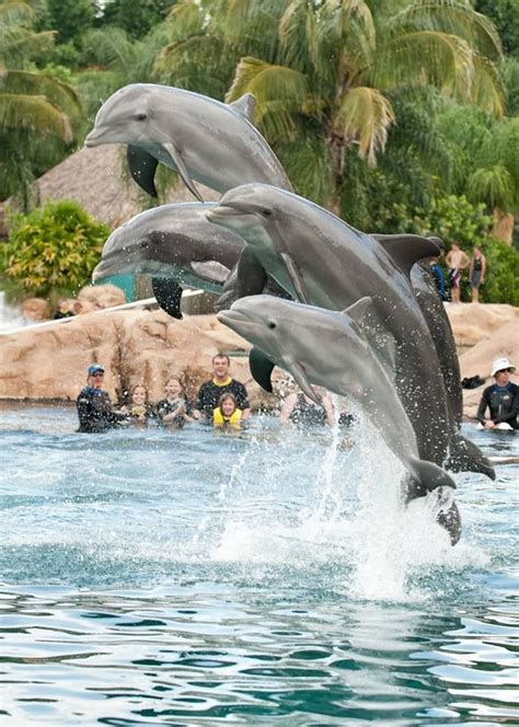 Discovery Cove Orlando Tickets by Discovery Cove Orlando Florida Swimming With The Dolphins