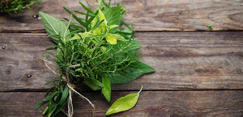 cuisine fenouil les herbes de provence le mag de flora le mag de flora