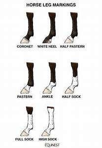 Information About Horse Face Markings Worksheet Yousense Info