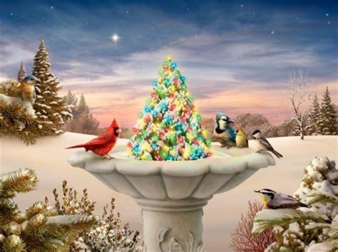 christmas birdbath winter nature background wallpapers