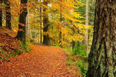 When is autumn 2020? Date and meaning behind the autumn ...