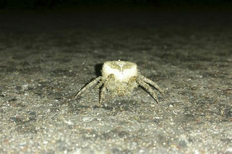 Barn Spider Bite by I Like Spiders On Jumping Spider Spiders And
