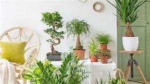 Plante D Intérieur Pas Cher : plante d 39 int rieur laquelle choisir quand on n 39 a pas la ~ Premium-room.com Idées de Décoration