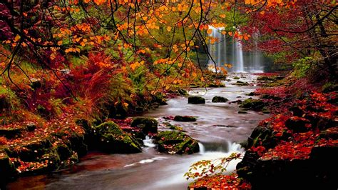 Colourful Autumn Background by Autumn Backgrounds Wallpapers Wallpaper Cave