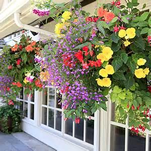 Hängepflanzen Balkon Mehrjährig by Blumen F 220 R Balkonk 228 Sten Sonnig Nxsone45