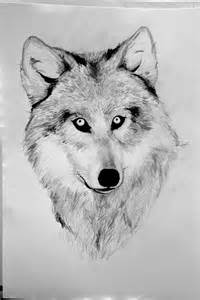 Wolf Sketches Drawings