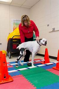 Pt For Pets  Vets Prescribing Physical Therapy