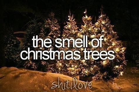 i love the smell of the christmas tree