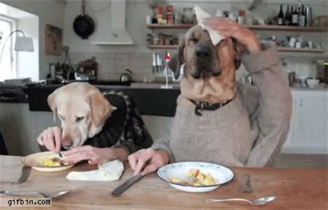 dogs  dinner  funny gifs updated daily