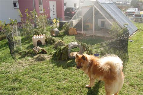 kaninchen auslauf gehege selber bauen freilauf und auslauf