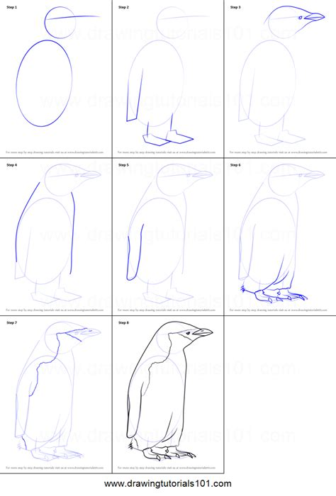 draw  chinstrap penguin printable step  step