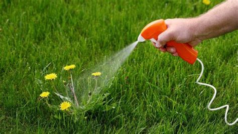 Roundup Weed Killer Deemed A Carcinogen, At Least In