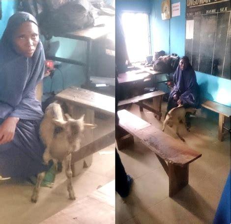 notorious female goat thief terrorizing kaduna residents finally caught   act photo