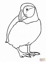 Puffin Coloring Pages Printable Atlantic Birds Colouring Drawing Puffins Realistic Template Zoo Animals Line Draw Arctic Drawings Coloringhome Dot Newfoundland sketch template
