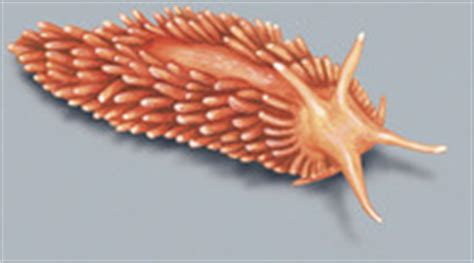 adw mollusca pictures