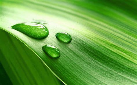 Wallpaper : leaf, drops, band, moisture 1920x1200 ...