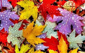 Drops, Autumn, 4k, 5k, Leaves, Rain, 2k, Wallpaper