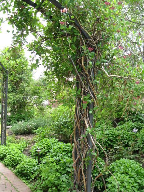 vines phelan gardens