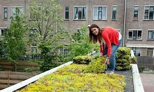 Extensive Dachbegrünung Pflanzen : dachbegr nung mit kassettensystem ~ Frokenaadalensverden.com Haus und Dekorationen