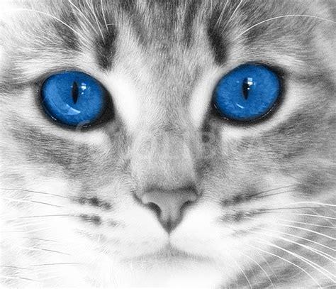 Blue Cat's Eyes Close Up
