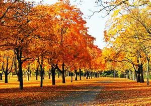 Schöne Herbstbilder Kostenlos : der goldene herbst foto bild jahreszeiten herbst ~ A.2002-acura-tl-radio.info Haus und Dekorationen
