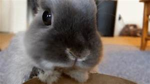 Baby Bunny GIFs - Find & Share on GIPHY