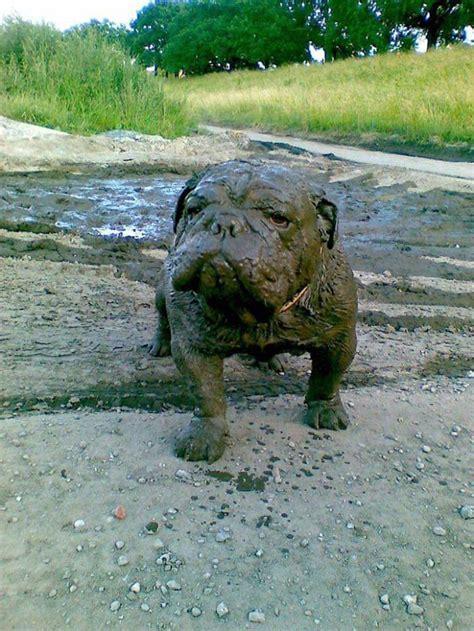reasons      dog play   mud