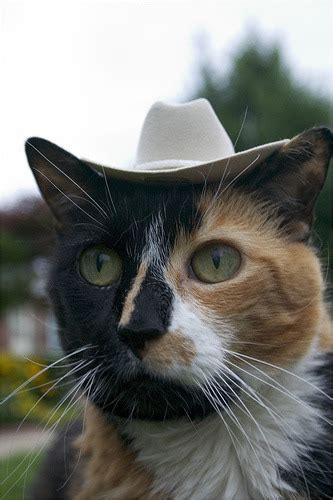 Caterville Howdy Partner Cats In Cowboy Hats