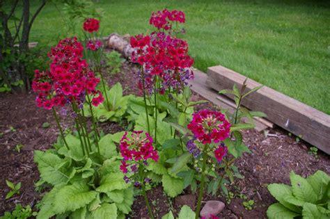 summer flowering perennials for shade natureworks plants indoor plants