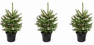 Tannenbaum Im Topf : ein weihnachtsbaum ist keine zimmerpflanze weihnachten lifestyle ~ Frokenaadalensverden.com Haus und Dekorationen