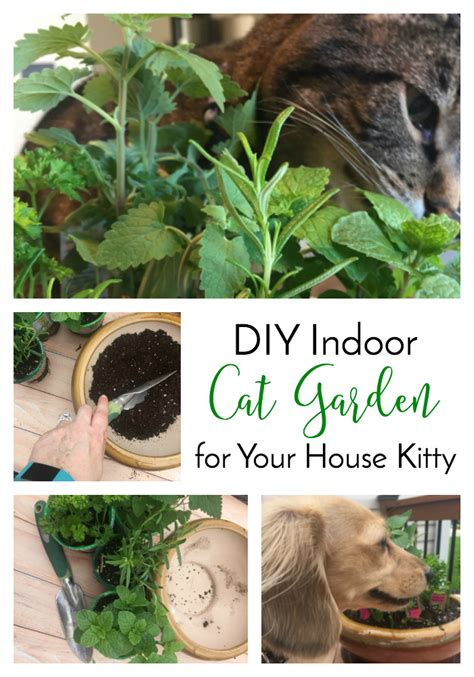 diy indoor cat garden for your house the lazy pit