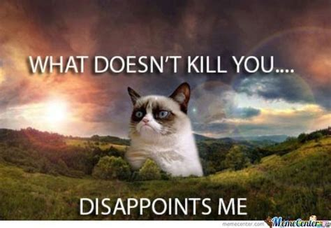 Mad Kitty Meme - mad cat memes image memes at relatably com