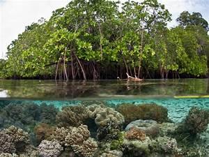 Contoh Diagram Hutan Mangrove