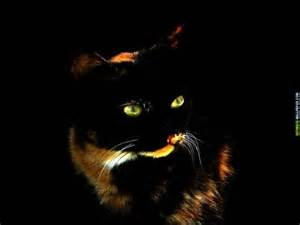 Neon eye cat Cats & Animals Background Wallpapers on