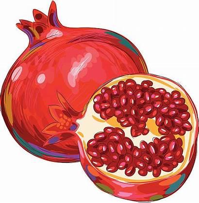 Pomegranate Clipart Vector Illustration Clip Isolated Fresh